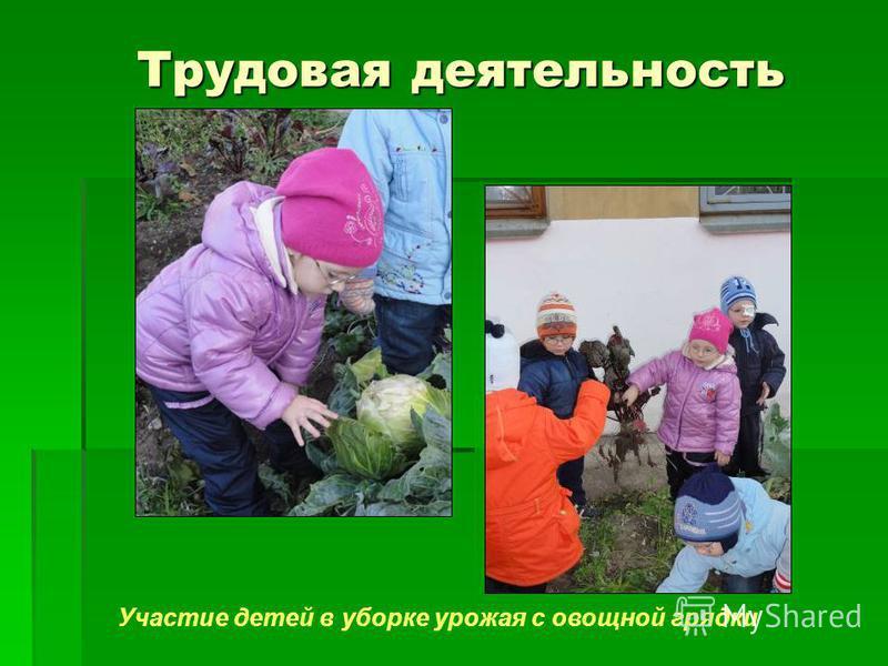 Трудовая деятельность Трудовая деятельность Участие детей в уборке урожая с овощной грядки