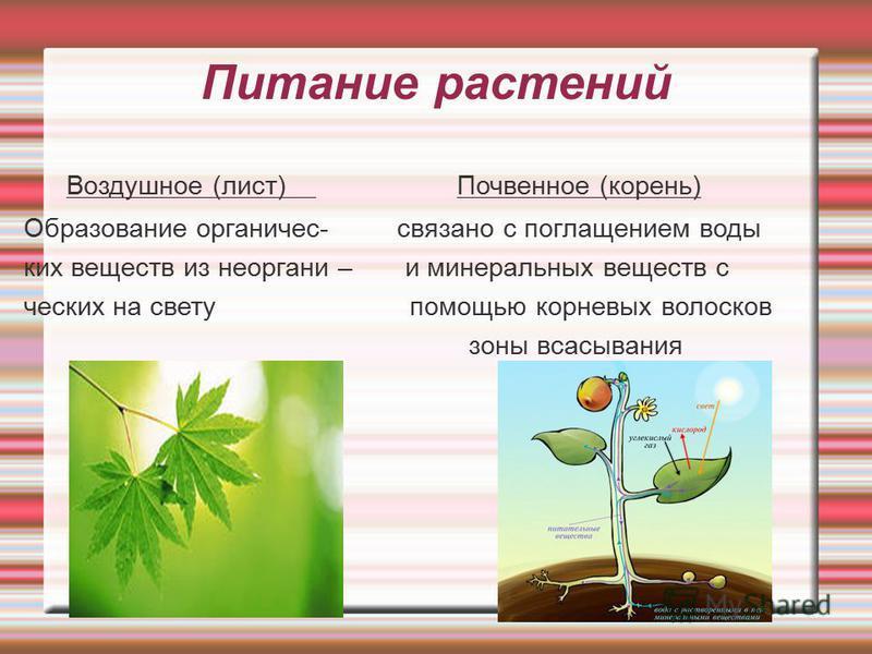 Питание растений Воздушное (лист) Почвенное (корень) Образование органичес- связано с поглощением воды ких веществ из неорганик – и минеральных веществ с чешских на свету помощью корневых волосков зоны всасывания