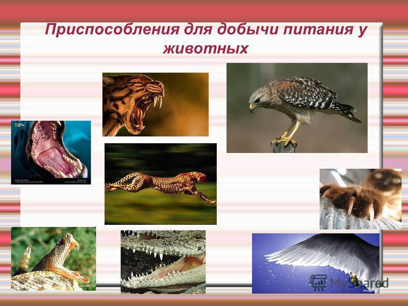 Приспособления для добычи питания у животных