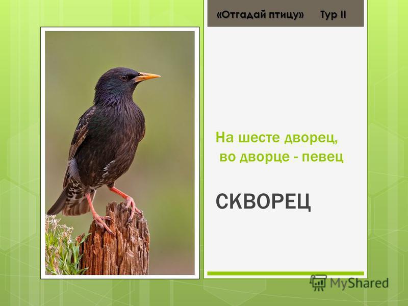 На шесте дворец, во дворце - певец СКВОРЕЦ «Отгадай птицу» Тур ІІ «Отгадай птицу» Тур ІІ