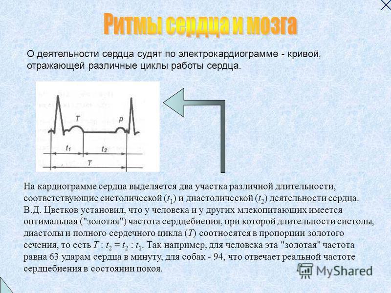 На кардиограмме сердца выделяется два участка различной длительности, соответствующие систолической (t 1 ) и диастолической (t 2 ) деятельности сердца. В.Д. Цветков установил, что у человека и у других млекопитающих имеется оптимальная (