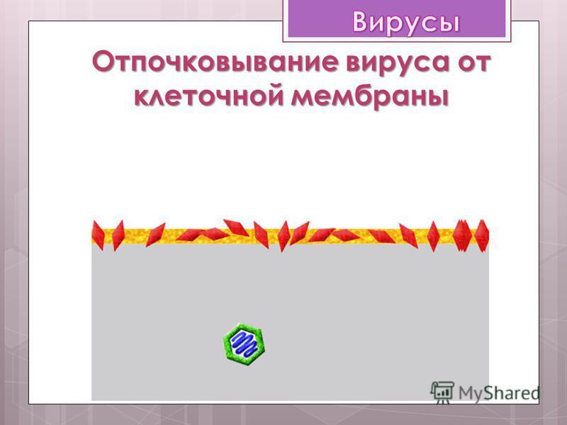 Отпочковывание вируса от клеточной мембраны