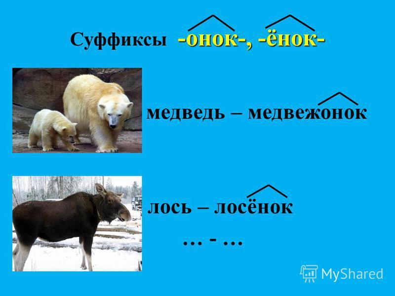 -онок-, -ёнок- Суффиксы -онок-, -ёнок- медведь – медвежонок лось – лосёнок … - …