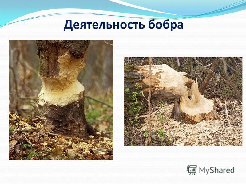Олег Газманов Родники