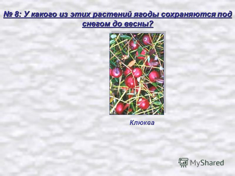 8: У какого из этих растений ягоды сохраняются под снегом до весны? 8: У какого из этих растений ягоды сохраняются под снегом до весны? Клюква