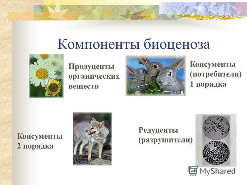 Биотические факторы среды БИОЦЕНОЗ – взаимосвязь живых организмов, обитающих в данной местности.