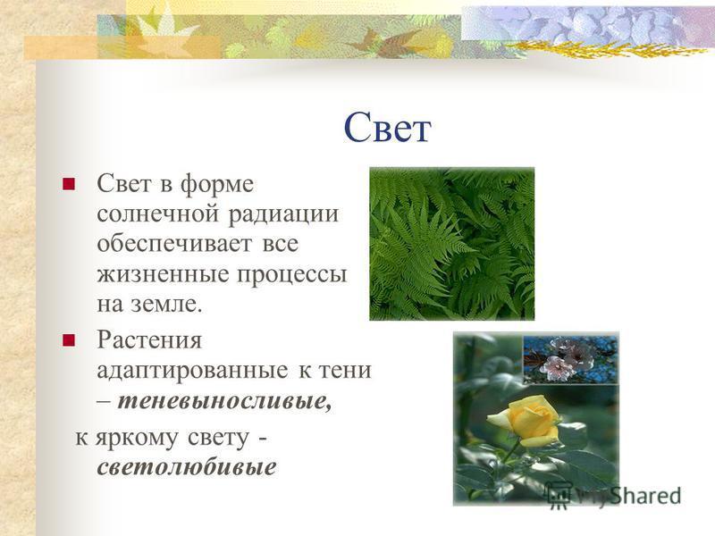 Температура Пойкилотермные – организмы с непостоянной температурой тела; Гомойотермные – организмы с постоянной температурой тела.