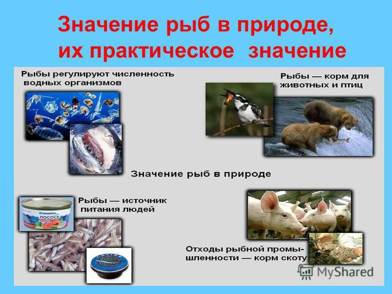 Значение рыб в природе, их практическое значение