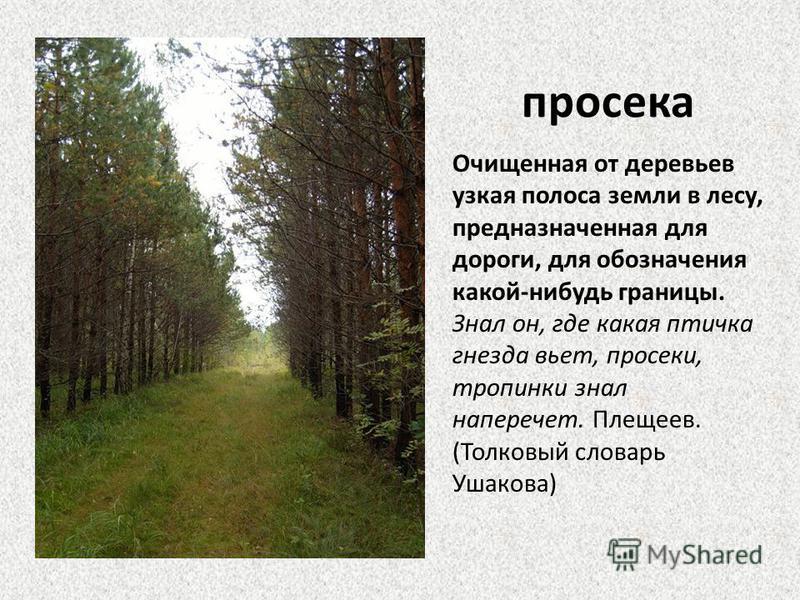 просека Очищенная от деревьев узкая полоса земли в лесу, предназначенная для дороги, для обозначения какой-нибудь границы. Знал он, где какая птичка гнезда вьет, просеки, тропинки знал наперечет. Плещеев. (Толковый словарь Ушакова)