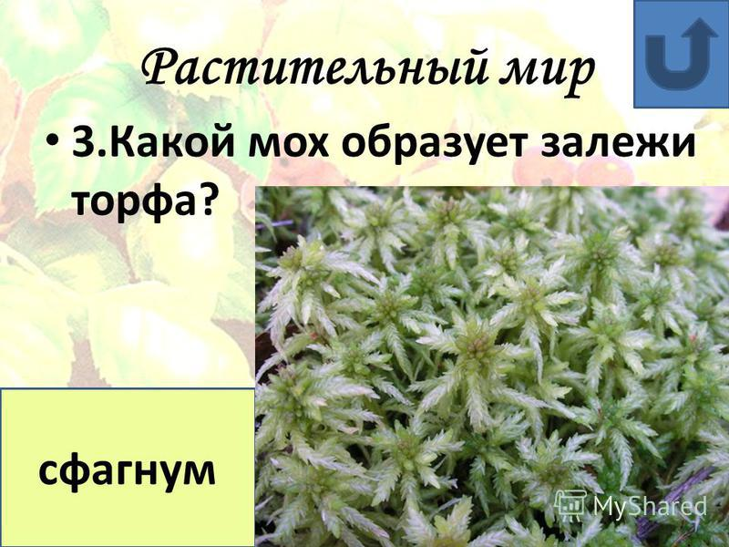 Растительный мир 2. Что называют «белым золотом» ? хлопок