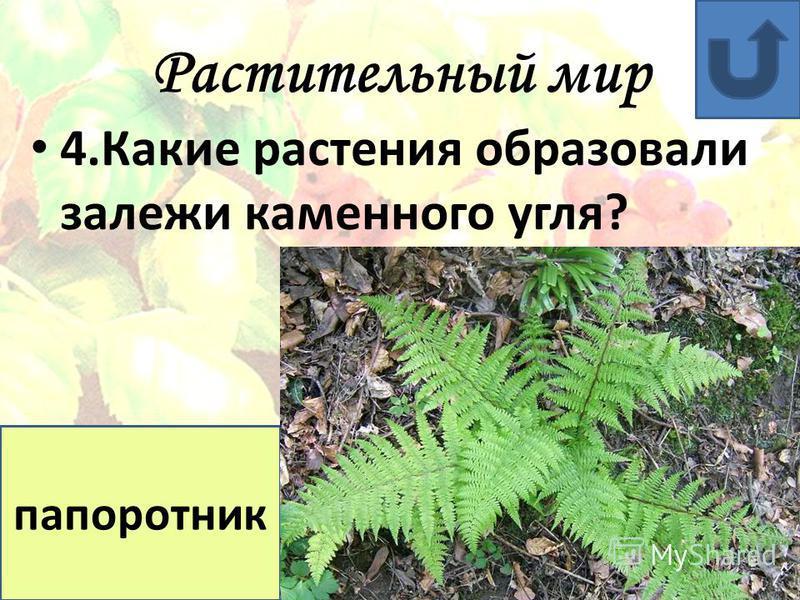 Растительный мир 3. Какой мох образует залежи торфа? сфагнум