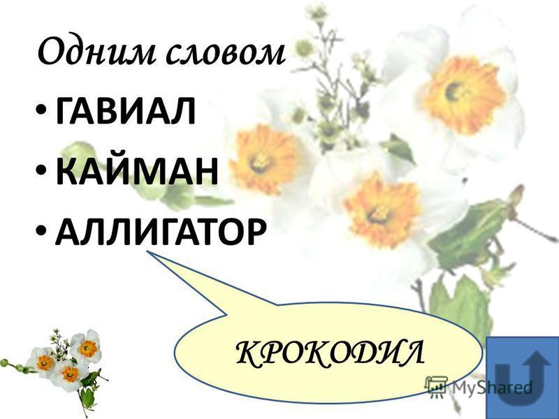 Одним словом ЭРДЕЛЬ - ФОКС - ЙОРКШИР ТЕРЬЕР