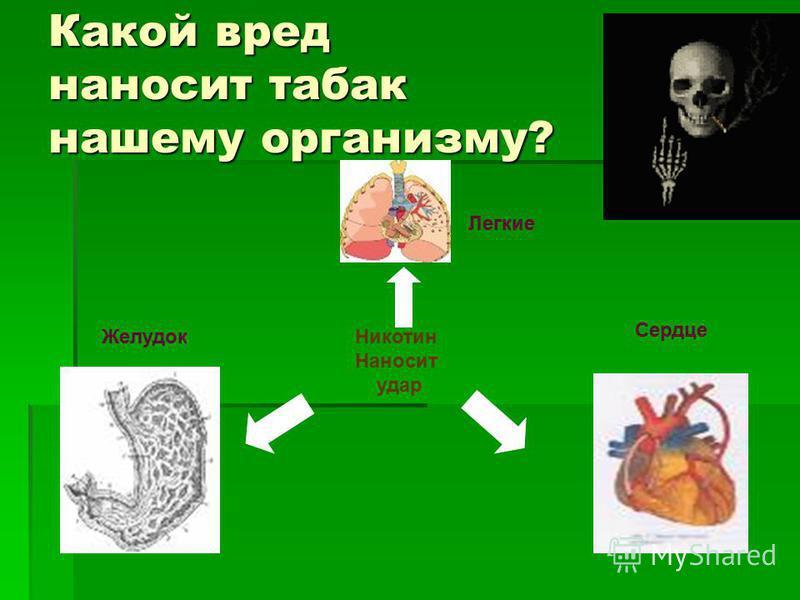 Никотин Наносит удар Легкие Сердце Желудок Какой вред наносит табак нашему организму?