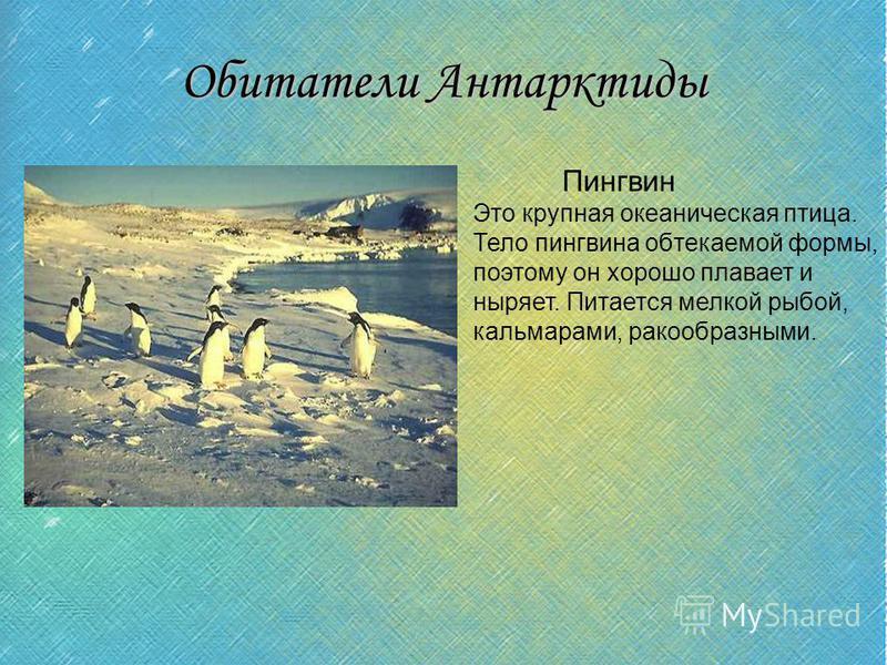Обитатели Антарктиды Пингвин Это крупная океаническая птица. Тело пингвина обтекаемой формы, поэтому он хорошо плавает и ныряет. Питается мелкой рыбой, кальмарами, ракообразными.