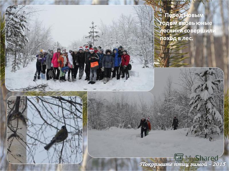 Перед Новым годом вновь юные лесники совершили поход в лес.