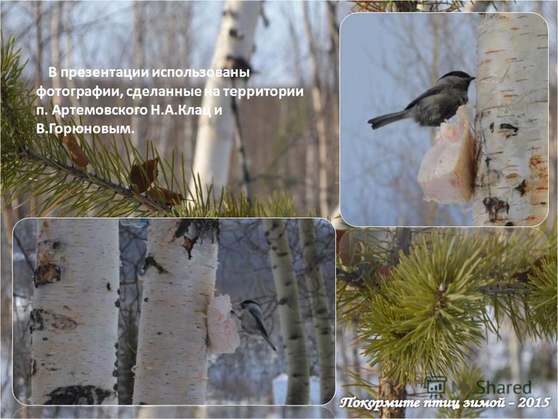 В презентации использованы фотографии, сделанные на территории п. Артемовского Н.А.Клац и В.Горюновым.