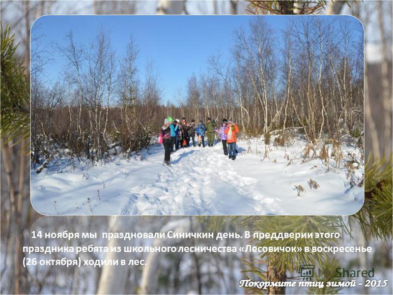 14 ноября мы праздновали Синичкин день. В преддверии этого праздника ребята из школьного лесничества «Лесовичок» в воскресенье (26 октября) ходили в лес.