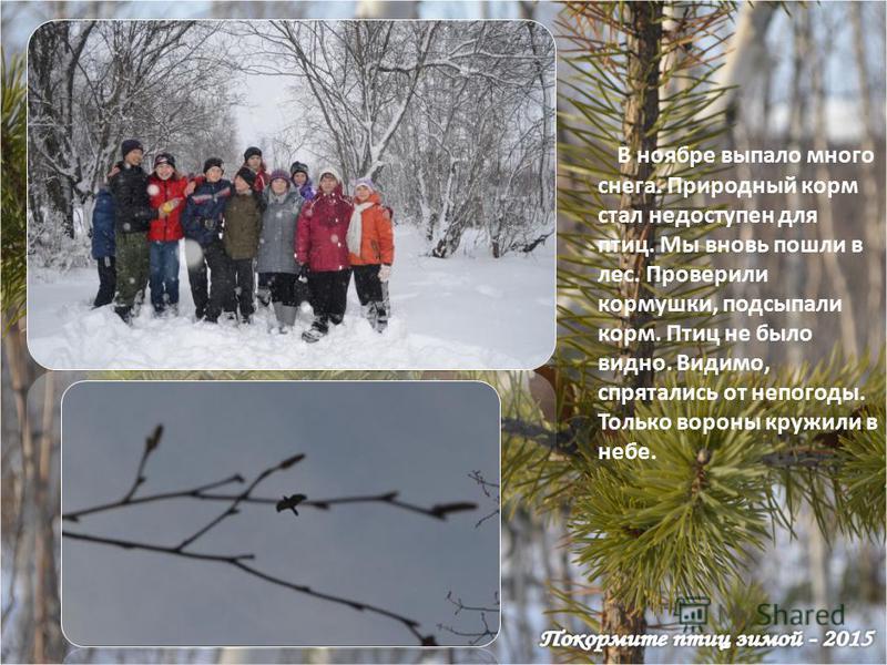 В ноябре выпало много снега. Природный корм стал недоступен для птиц. Мы вновь пошли в лес. Проверили кормушки, подсыпали корм. Птиц не было видно. Видимо, спрятались от непогоды. Только вороны кружили в небе.