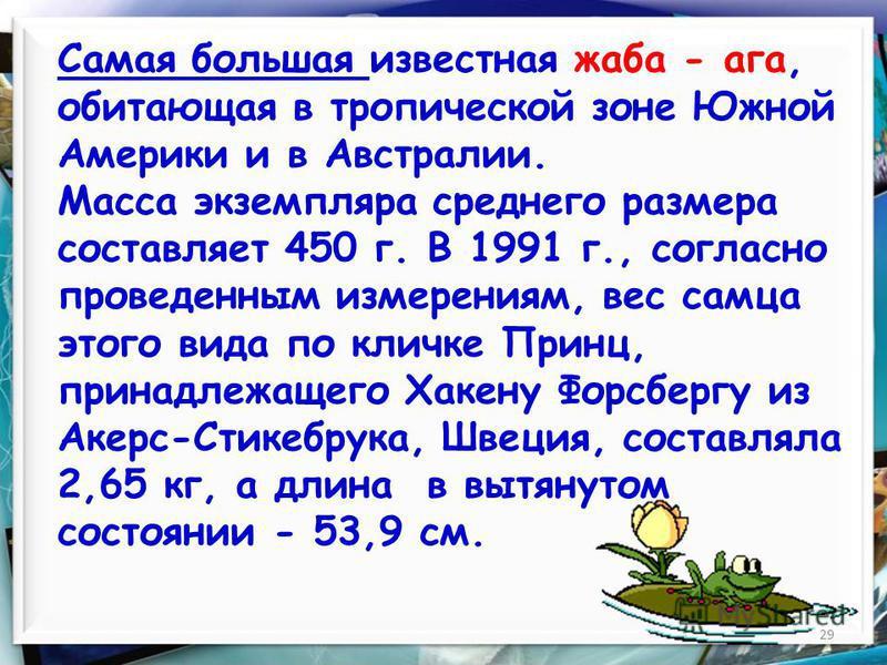 29 Самая большая известная жаба - ага, обитающая в тропической зоне Южной Америки и в Австралии. Масса экземпляра среднего размера составляет 450 г. В 1991 г., согласно проведенным измерениям, вес самца этого вида по кличке Принц, принадлежащего Хаке