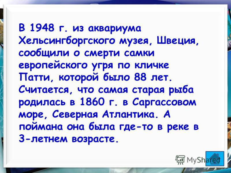 33 В 1948 г. из аквариума Хельсингборгского музея, Швеция, сообщили о смерти самки европейского угря по кличке Патти, которой было 88 лет. Считается, что самая старая рыба родилась в 1860 г. в Саргассовом море, Северная Атлантика. А поймана она была