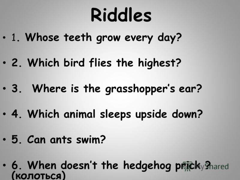 Riddles 1. Whose teeth grow every day? 2. Which bird flies the highest? 3. Where is the grasshoppers ear? 4. Which animal sleeps upside down? 5. Can ants swim? 6. When doesnt the hedgehog prick ? (колоться)