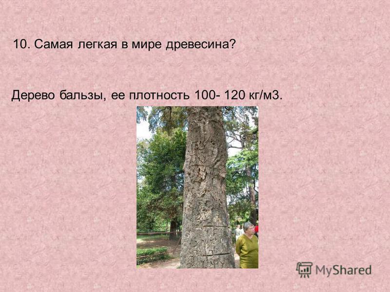 10. Самая легкая в мире древесина? Дерево бальзы, ее плотность 100- 120 кг/м 3.