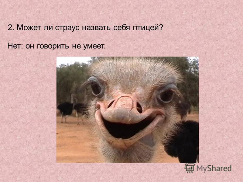 2. Может ли страус назвать себя птицей? Нет: он говорить не умеет.