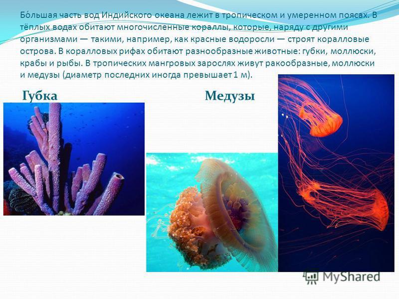 Бо́льшая часть вод Индийского океана лежит в тропическом и умеренном поясах. В тёплых водах обитают многочисленные кораллы, которые, наряду с другими организмами такими, например, как красные водоросли строят коралловые острова. В коралловых рифах об