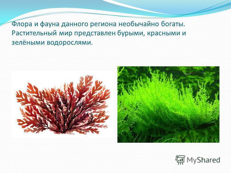 Флора и фауна данного региона необычайно богаты. Растительный мир представлен бурыми, красными и зелёными водорослями.
