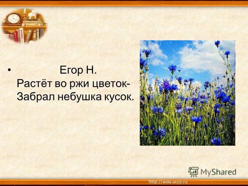 Егор Н. Растёт во ржи цветок- Забрал небушка кусок.