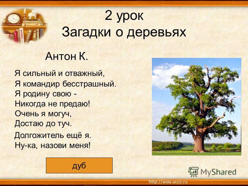 2 урок Загадки о деревьях Антон К. Я сильный и отважный, Я командир бесстрашный. Я родину свою - Никогда не предаю! Очень я могуч, Достаю до туч. Долгожитель ещё я. Ну-ка, назови меня! дуб