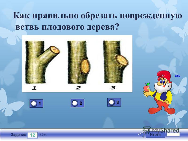 Итоги 12 Задание 4 бал. 1111 2222 3333 Как правильно обрезать поврежденную ветвь плодового дерева?