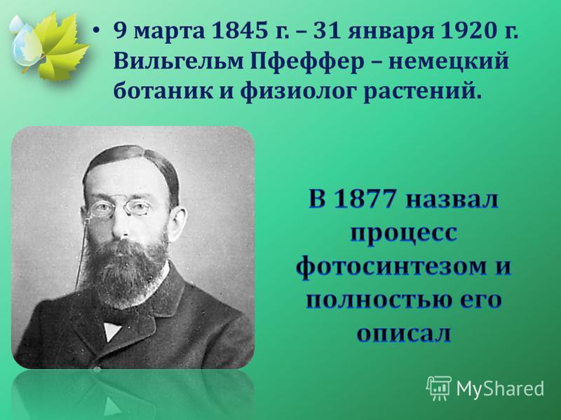 9 марта 1845 г. – 31 января 1920 г. Вильгельм Пфеффер – немецкий ботаник и физиолог растений.