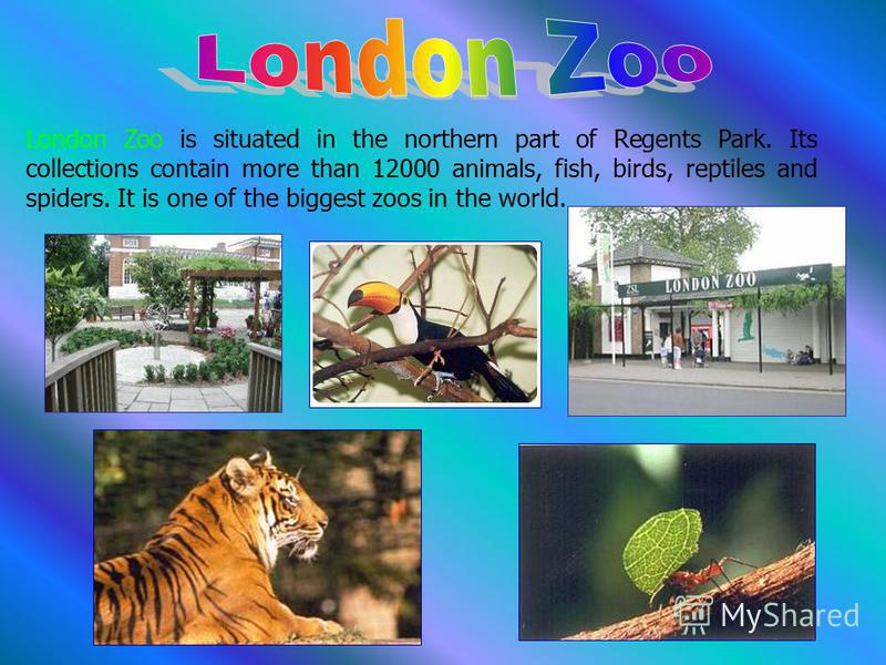 London Zoo is situated in the northern part of Regents Park. Its collections contain more than 12000 animals, fish, birds, reptiles and spiders. It is one of the biggest zoos in the world.