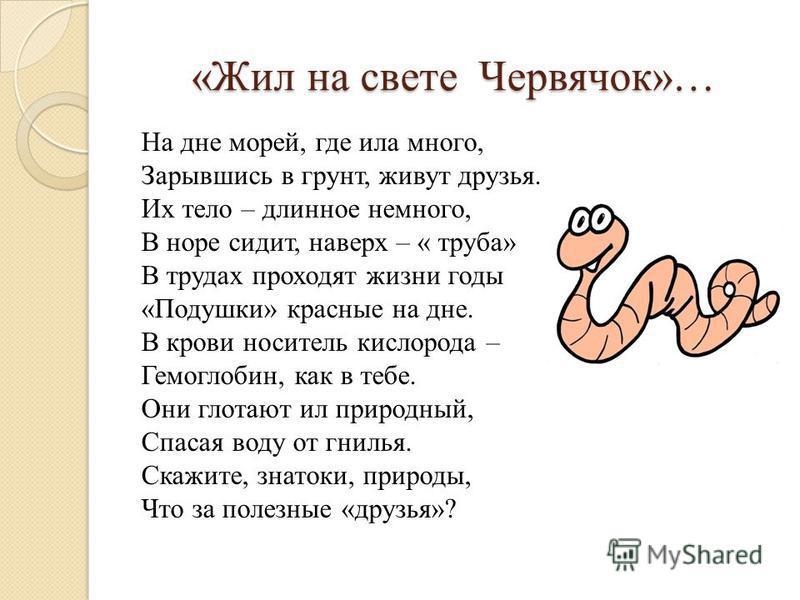 «Жил на свете Червячок»… На дне морей, где ила много, Зарывшись в грунт, живут друзья. Их тело – длинное немного, В норе сидит, наверх – « труба» В трудах проходят жизни годы «Подушки» красные на дне. В крови носитель кислорода – Гемоглобин, как в те