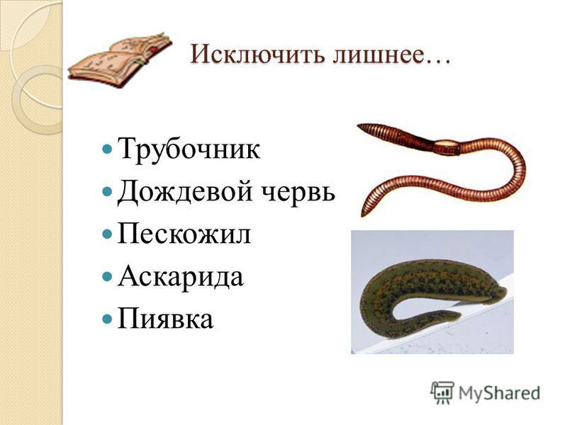 Исключить лишнее… Трубочник Дождевой червь Пескожил Аскарида Пиявка