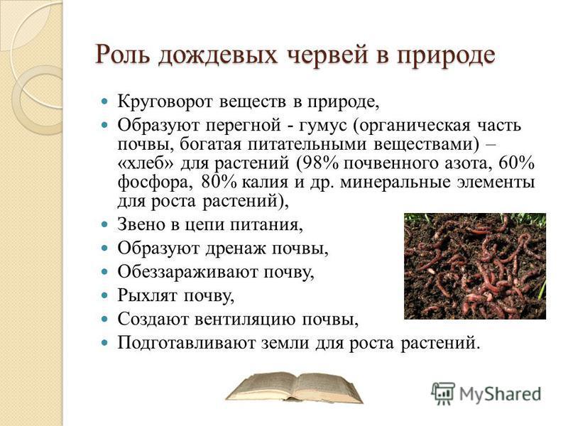 Роль дождевых червей в природе Круговорот веществ в природе, Образуют перегной - гумус (органическая часть почвы, богатая питательными веществами) – «хлеб» для растений (98% почвенного азота, 60% фосфора, 80% калия и др. минеральные элементы для рост