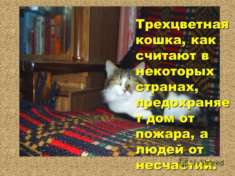 Трехцветная кошка, как считают в некоторых странах, предохраняет дом от пожара, а людей от несчастий. Трехцветная кошка, как считают в некоторых странах, предохраняет дом от пожара, а людей от несчастий.