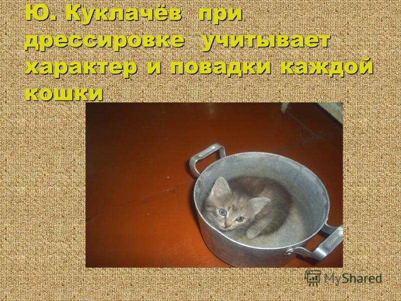 Ю. Куклачёв при дрессировке учитывает характер и повадки каждой кошки
