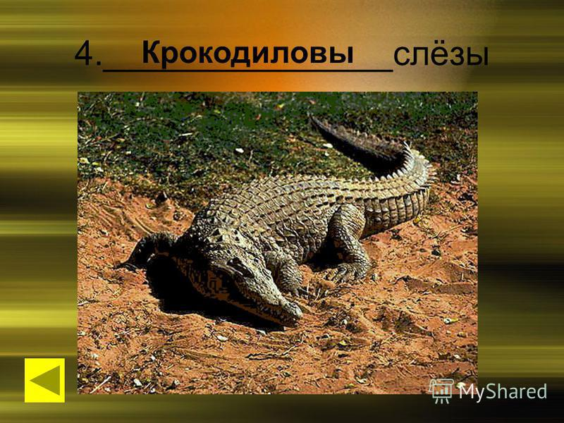 4._______________слёзы Крокодиловы