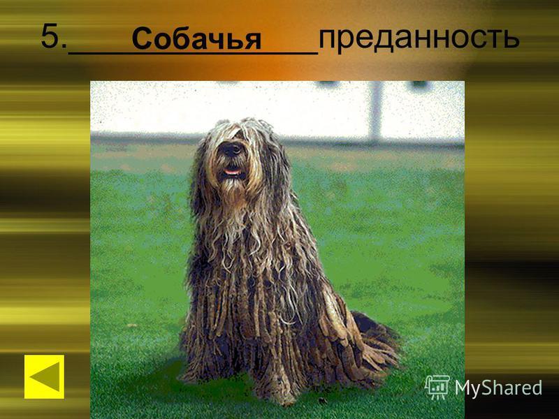 5._____________преданность Собачья