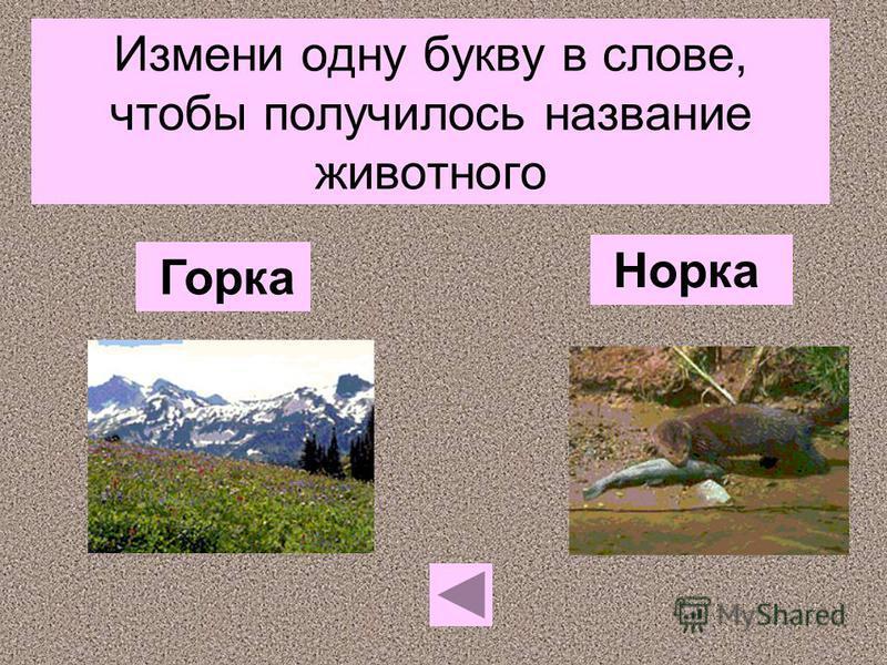 Измени одну букву в слове, чтобы получилось название животного Норка Горка