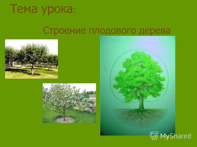 Тема урока : Строение плодового дерева