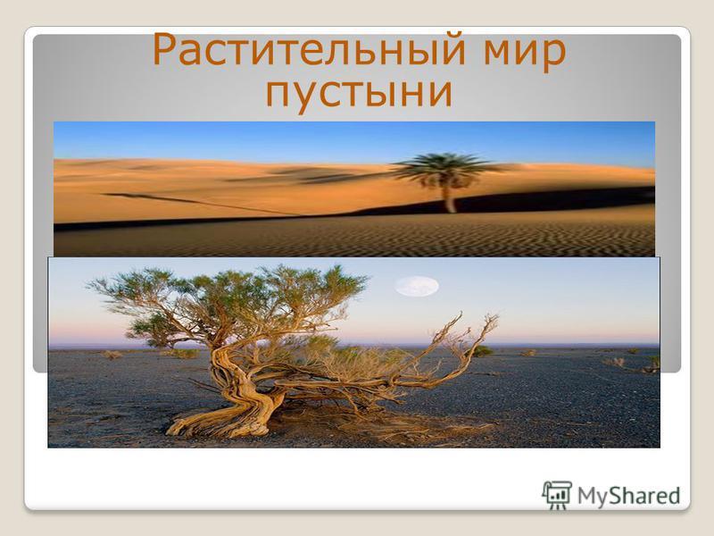 Растительный мир пустыни