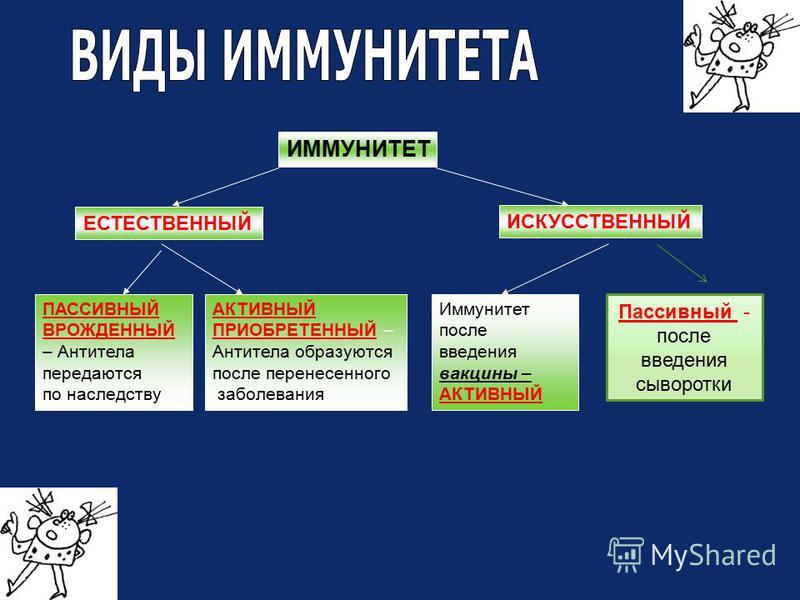 ИММУНИТЕТ ЕСТЕСТВЕННЫЙ ИСКУССТВЕННЫЙ ПАССИВНЫЙ ВРОЖДЕННЫЙ – Антитела передаются по наследству АКТИВНЫЙ ПРИОБРЕТЕННЫЙ – Антитела образуются после перенесенного заболевания Иммунитет после введения вакцины – АКТИВНЫЙ Пассивный - после введения сыворотк