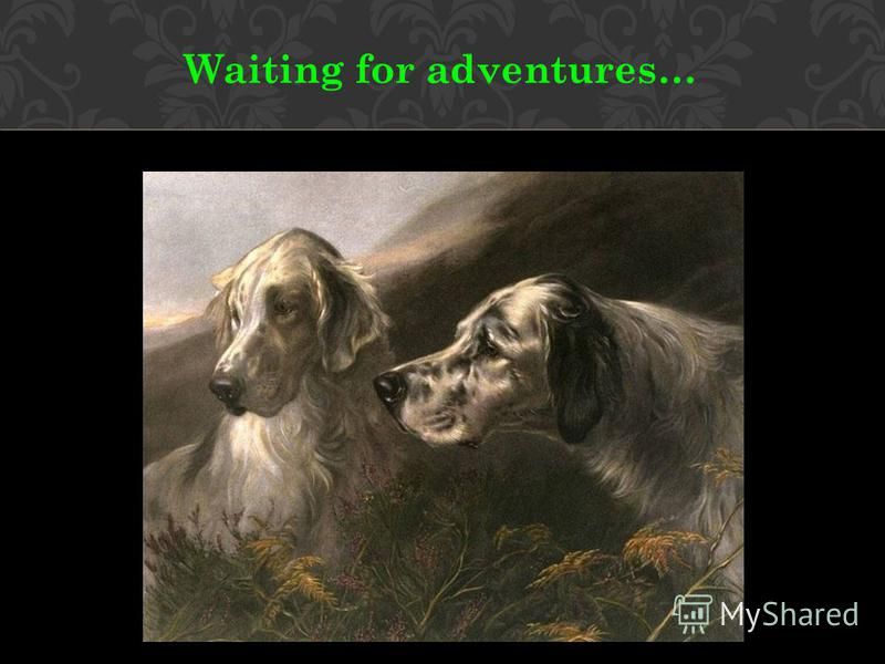 Waiting for adventures…