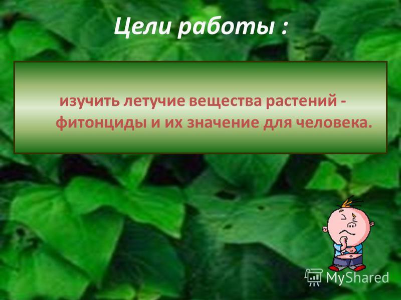 Цели работы : изучить летучие вещества растений - фитонциды и их значение для человека.