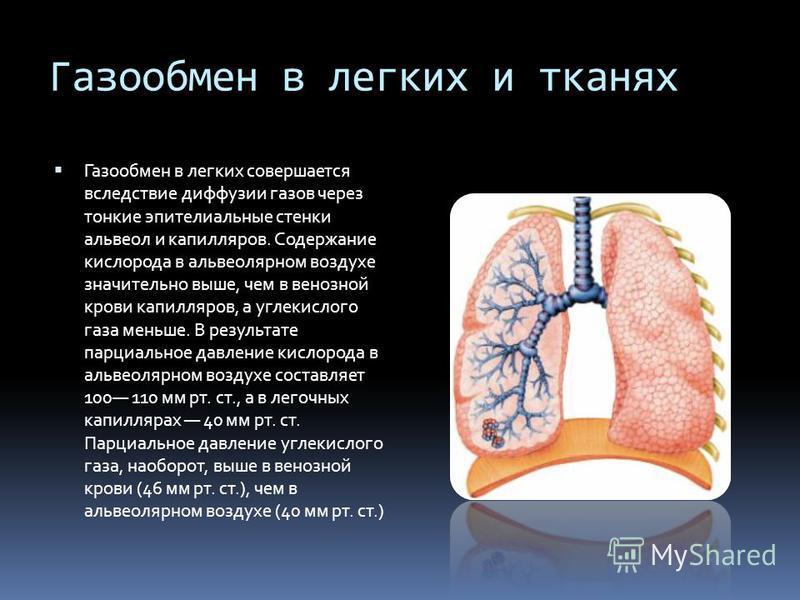 Газообмен в легких и тканях Газообмен в легких совершается вследствие диффузии газов через тонкие эпителиальные стенки альвеол и капилляров. Содержание кислорода в альвеолярном воздухе значительно выше, чем в венозной крови капилляров, а углекислого