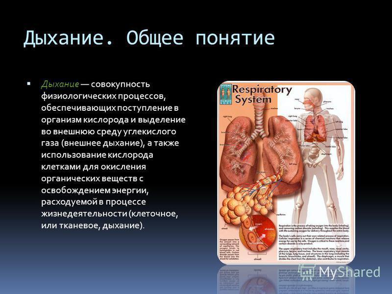 Дыхание. Общее понятие Дыхание совокупность физиологических процессов, обеспечивающих поступление в организм кислорода и выделение во внешнюю среду углекислого газа (внешнее дыхание), а также использование кислорода клетками для окисления органически