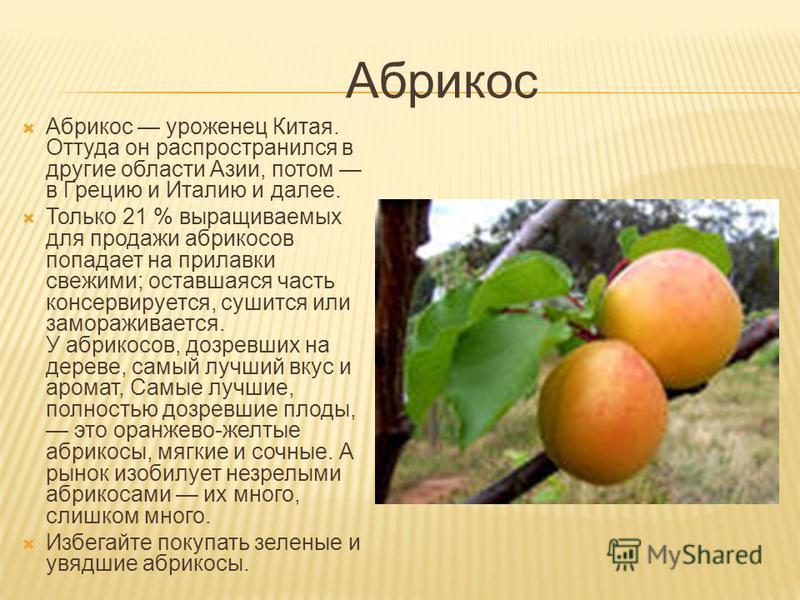 Персиковое дерево Родиной персиков является Китай. Через Персию и Грецию персик достиг Древнего Рима, а уже оттуда распространился по всей Европе. Персик с гладкой кожицей носит название нектарин (если косточка у него отделяется) или брюньон (если ко